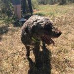 The truffle hunter, Choco <3