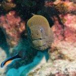 Photo de Top Dive, Bora Bora