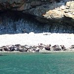 Foto de Ramsey Island Boat Trips -Thousand Islands Expeditions