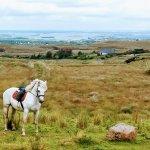 Foto de Knockillaree Riding Centre