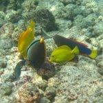 Colorful fish group -- Kahalu'u Beach