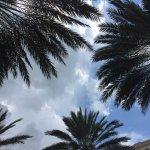 Photo de Gaylord Palms Resort & Convention Center