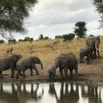 Serengeti Water Hole