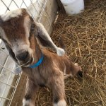 Wonderful goats and goat products!