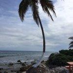 Wind blown palm!
