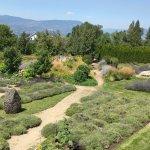 Photo of Okanagan Lavender & Herb Farm