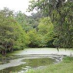 Photo de LeBlanc Swamp Tours