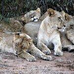 Garonga Safari Camp Φωτογραφία