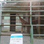 Photo of Kumamoto Zoo and Botanical Gardens