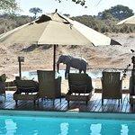 Human pool and elephant pool