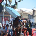Really hot for cariage ride even for horses, you can get those rides where you buy your tickets