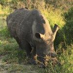 Photo de Elephant Plains Game Lodge