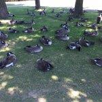 Late July walk around Wascana Lake, Regina.