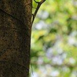 Photo de Tabin Wildlife Resort