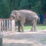 Słoniątko:)