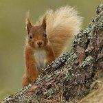 caw squirrel_large.jpg