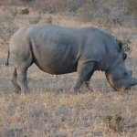 We had great sightings of rhinos