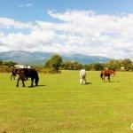 Les chevaux au repos.