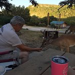 Even the deer are friendly at Medina highpoint resort