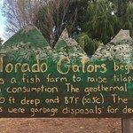Colorado Gators nearby day trip