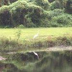 Photo de Sawgrass Lake Park