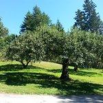 Apple Groves