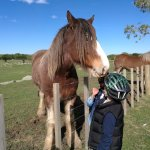 Kids hand feeding very friendly horses