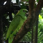 The hotel's parrot greets visitors.