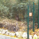 Photo of Menagerie du Jardin des Plantes