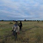 Early morning bush walk