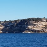 Photo of Whale Watching Sydney