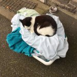 Minnie enjoying a sneaky sleep on a pile of dirty washing from one of our cottages 😮