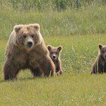 Mom and two first year cubs