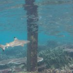 Shark under the pier