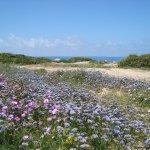 Красивая цветущая полянка на территории