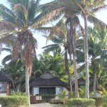 Photo of Palm Grove