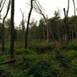 Swamp near bear territory