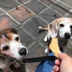 Dog-friendly patio!