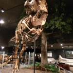 T Rex, one of a number of dinosaur exhibits