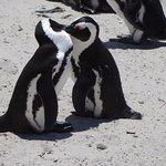 Photo de Boulders Penguin Colony