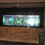 Saltwater Fish Tank-Cheddar's