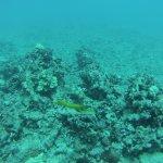 Photo de Reef Pirates Diving
