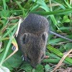 Field mice in the cemetery
