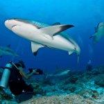 Shark Dive TGI