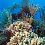 Reef Roatan TGI
