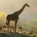Safari grounds