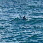 Photo de Sea Screamer