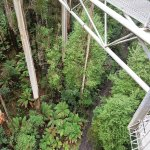 Check out the trees from above