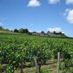 Vineyard of Chateau La Gaffeliere