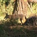 Photo de Ponderosa State Park